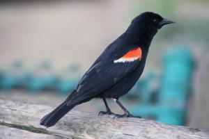 It's a bird! Get it? TWITTER? Eh. Everyone's a critic.