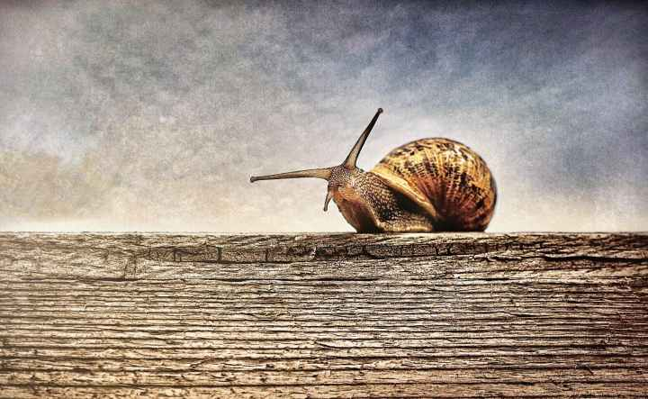 close up photography of brown snail on brown wooden surface