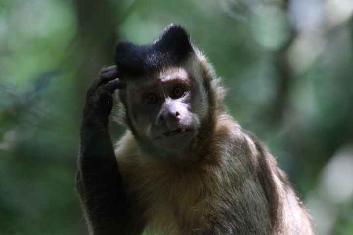 brown monkey photo